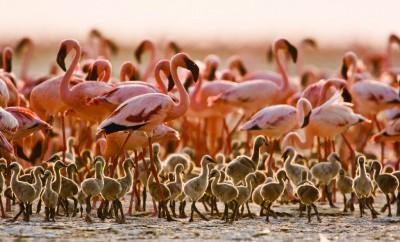 Avtours - Rondreis Tanzania